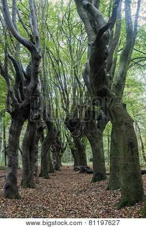 Scary Trees In Zwolle Area
