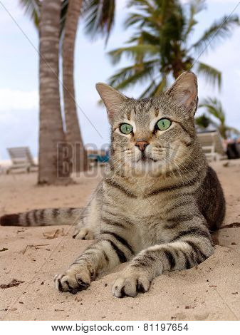 Cat Laying On The Beach With Palms