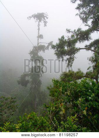 Fog Jungle Rainy Rainforest Jamaica