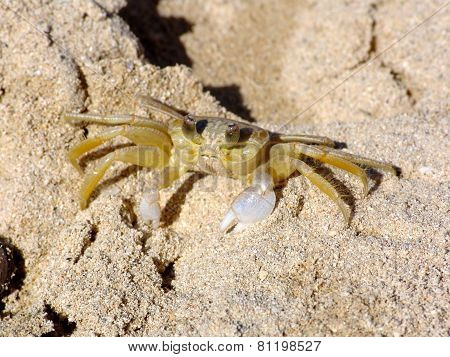 Mr Crab Waiting On The Beach