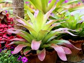 picture of bromeliad  - lovely a bright green macro Bromeliad  - JPG