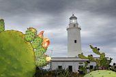 La Mola Lighthouse Formentera Nopal Chumbera poster