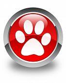 stock photo of animal footprint  - Animal footprint icon glossy red round button - JPG