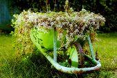 picture of wheelbarrow  - A green rustic wheelbarrow full of colorful flowers on a grass lawn - JPG