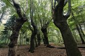 foto of scary  - Scary trees in Zwolle area - JPG