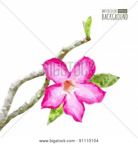 Watercolor Vector Background With Tree Branch And Pink Tropical Flower. Floral  Illustration
