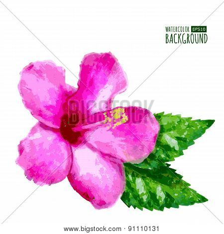 Watercolor Vector Background With Pink Tropical Hibiscus Flower. Floral Summer  Illustration