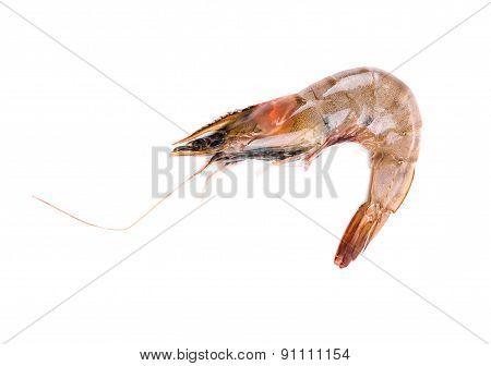 Raw tiger shrimp.