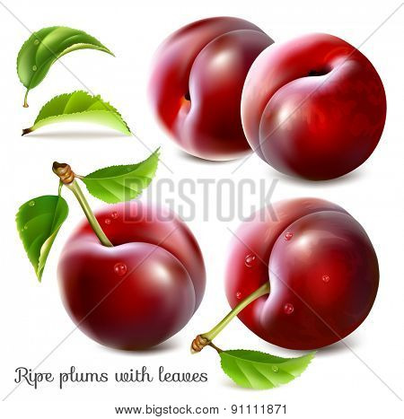 Ripe plums with green leaves. Vector illustration.