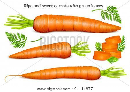 Carrots with leaves and slices. Vector illustration.