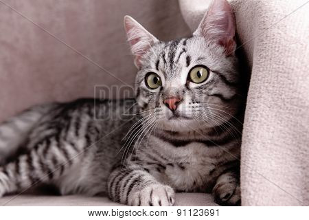 Beautiful cat on chair close-up
