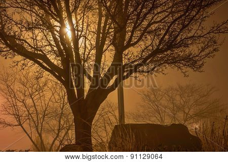 Bare Tree In The Fog