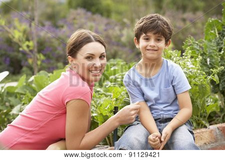 Woman Working In Vegetable Garden