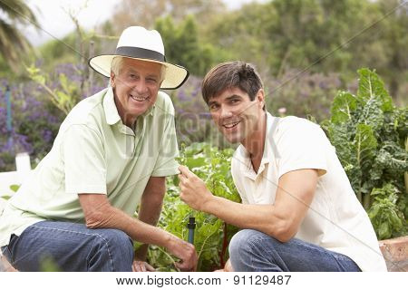 Senior Father And Adult Son Working In Vegetable Garden