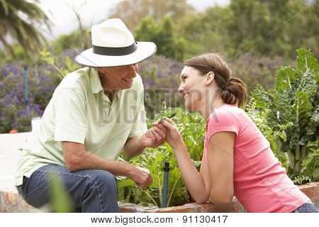 Senior Father And Adult Daughter Working In Vegetable Garden