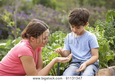 Mother And Son Working In Vegetable Garden