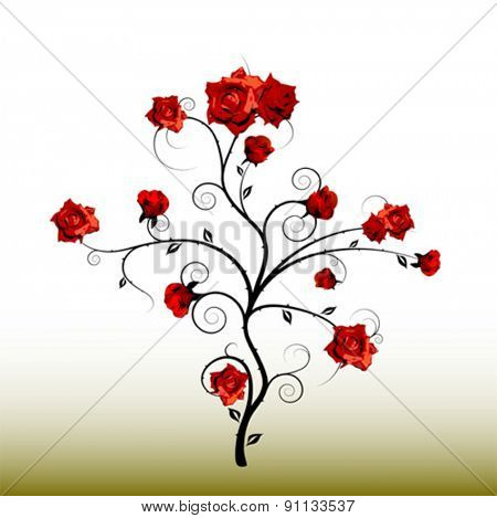 rose shrub vector