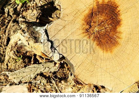 Tree stump close up