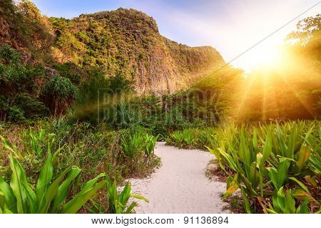 Trail in the jungles of the island of Ko Phi Phi Lei in Thailand