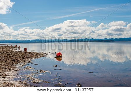 Red Buoy on a Shoreline
