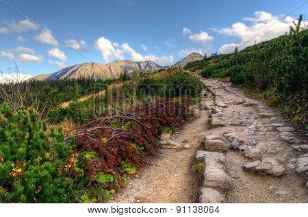 Autumn Sunny Mountain Path.
