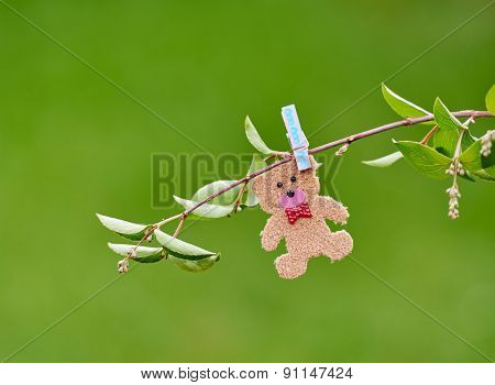 Small teddy on branch