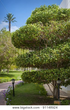 Trees In The Park , Beautiful Park Trees , Formal Garden