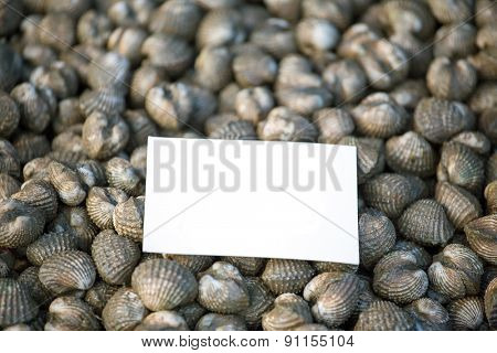 Fresh cockles seafood background