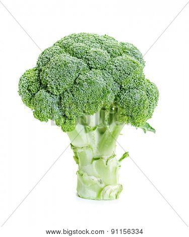 Fresh raw broccoli on a white background