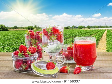 Strawberry smoothie with fresh berries in the strawberry field background.