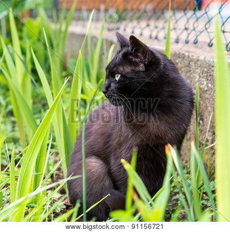 alert cat in the grass