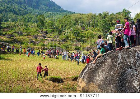 Group Of Toraja People On Rice Field