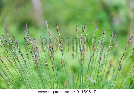 Young Spring Flowers And Leaves On Green Background