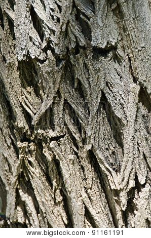 Nature Abstract: Textured Tree Bark Background