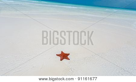 Starfish in clear water
