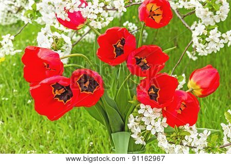 Bouquet Of Red Tulips In The Spring Garden