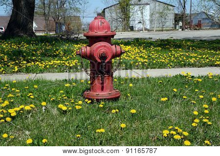 Mueller Fire Hydrant