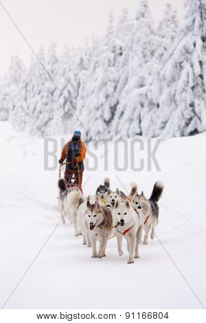 sledge dogging, Sedivacek's long, Czech Republic