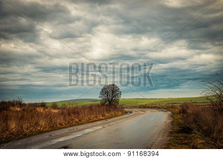 wonderful landscape with lonely tree by country road in the midst of fields
