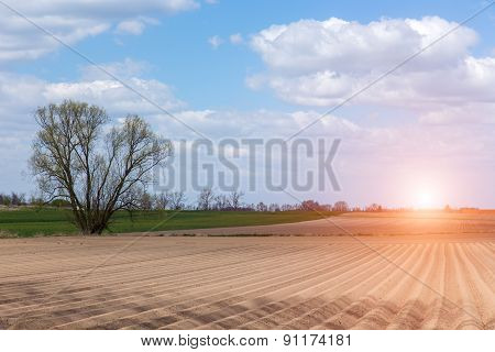 Sunset Over The Field With Rows