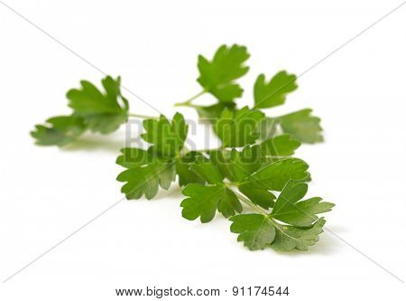 fresh parsley isolated on white background