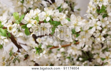 A branch with lots of white flowers close-up