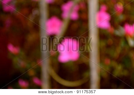 Bokeh Photo Of Bright Fuschia Azaleas And Wrought Iron Column