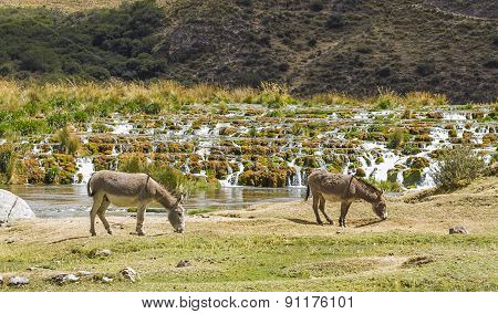 donkeys in the mountains