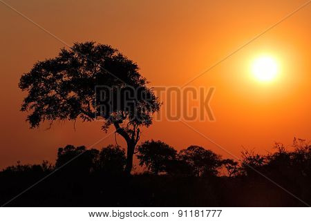 Sunset with silhouetted African tree, southern Africa