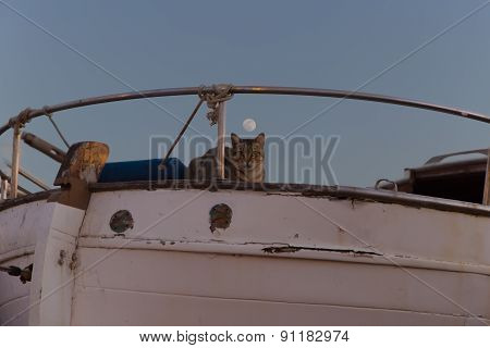 Funny Cat Observed Environment From A Fishing Boat