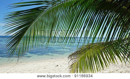 Palm Tree In Paradise