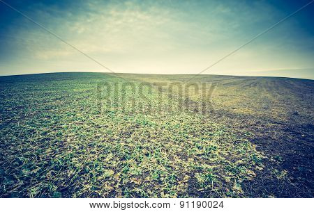 Vintage Photo Of Dry Field..