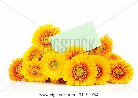 Bouquet of gerber flowers on white background