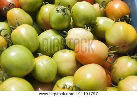 tomatoes farm